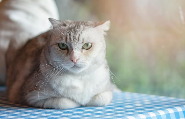 Simpatico gattino che si rilassa a casa. animale domestico in casa