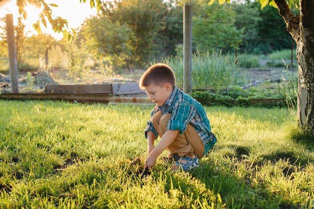 Un ragazzino carino sta piantando i germogli in giardino al tramonto. giardinaggio e agricoltura.