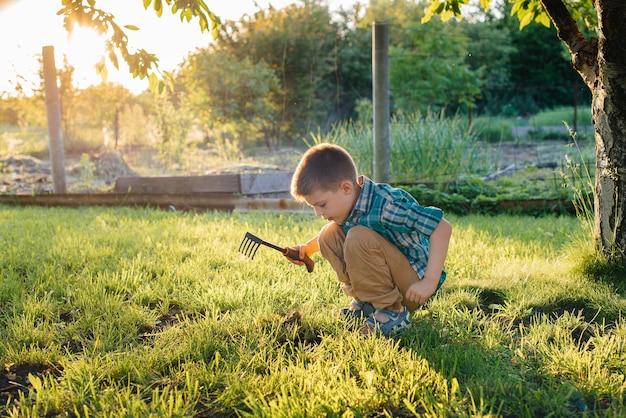 Un ragazzino sveglio sta piantando i germogli in giardino al tramonto. giardinaggio e agricoltura.