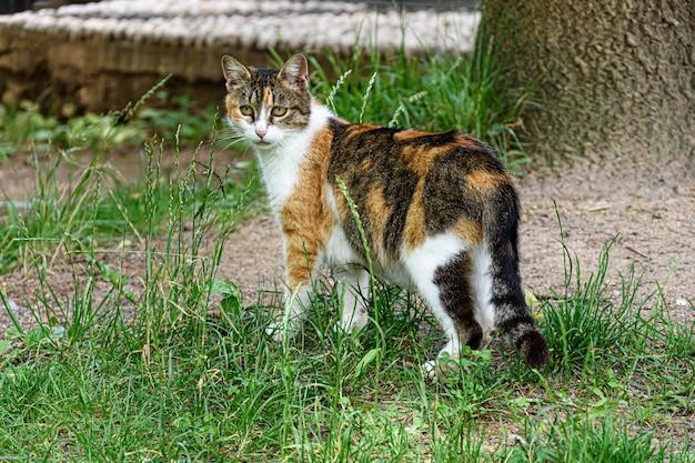 Simpatico gattino con bellissimi colori in piedi nel mezzo di un campo coperto d'erba