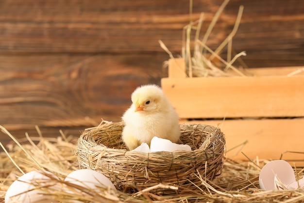 Piccolo pulcino sveglio nel nido della fattoria