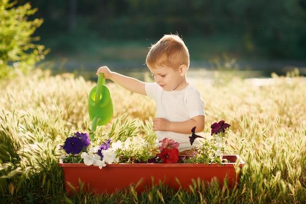 Piantine d'innaffiatura del fiore del ragazzo sveglio del piccolo bambino in un vaso nel giardino sul tramonto. divertente piccolo giardiniere. concetto di primavera, natura e cura.