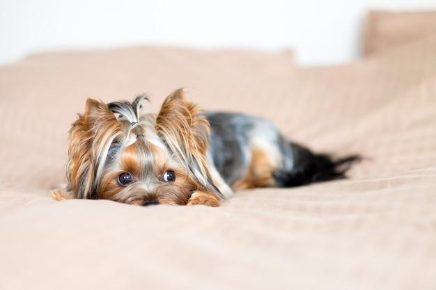 Simpatico cagnolino nascosto in una coperta