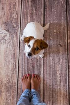 Piccolo cane sveglio che si trova sul pavimento di legno. accanto alle gambe dei suoi proprietari. vista dall'alto di giorno, stile di vita
