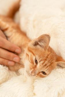 Il piccolo gattino a strisce rosso domestico sveglio sta dormendo su un copriletto leggero. un gatto affascinante con un naso rosa che riposa su una coperta. mano della persona che accarezza un gattino