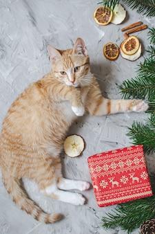 Piccolo gattino sveglio dello zenzero che risiede nella coperta bianca molle della pelliccia sintetica che tiene l'annata di nuovo anno di natale del contenitore di regalo di carta rosso