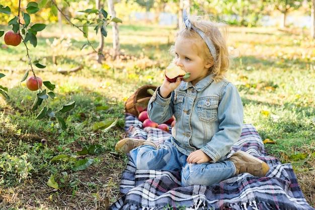 Bambina sveglia che mangia mela rossa organica matura nel frutteto di mele con un cesto di mele in autunno. bella ragazza europea dai capelli ricci in un abito di jeans che fa un picnic in famiglia in una fattoria.