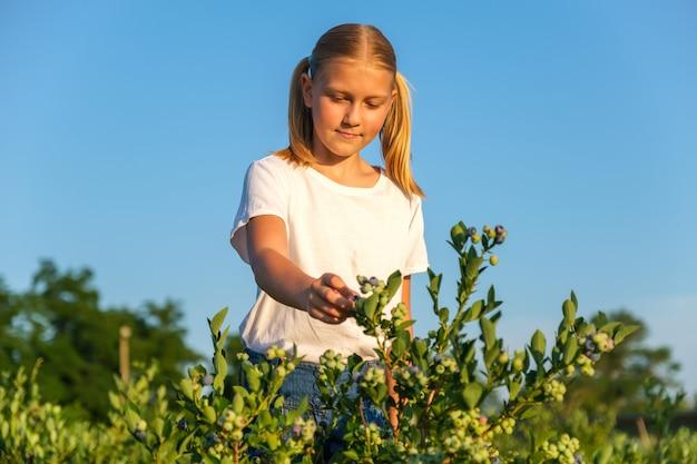 Bambina sveglia che raccoglie i mirtilli sull'azienda agricola organica