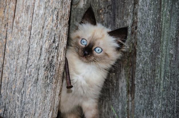 Carino gattino grigio e fumoso sta giocando all'aperto. ritratto di un gattino grigio con zampe nere. tema animale per bambini