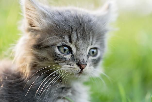 Piccolo gattino grigio sveglio che gioca nell'erba