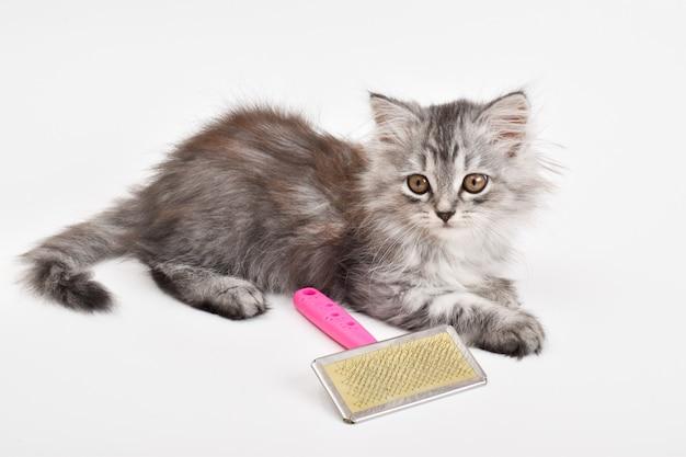 Un simpatico gattino giace accanto a un pettine su uno sfondo bianco. cura degli animali. un luogo da copiare. copia spazio