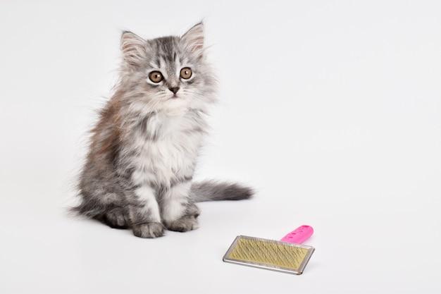 Un simpatico gattino giace accanto a un pettine su uno sfondo bianco. cura degli animali. un luogo da copiare.