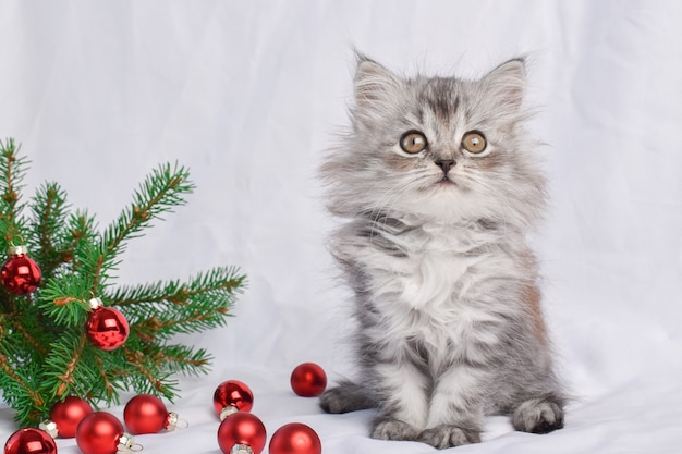 Un simpatico gattino è seduto accanto a un ramo di un albero di natale con giocattoli di palline di vetro rosso