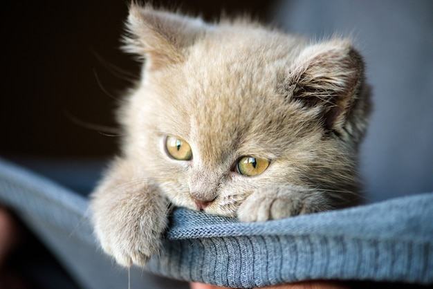 Piccolo gattino sveglio
