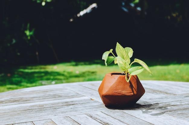 Simpatica pianta in vaso sul tavolo all'aperto