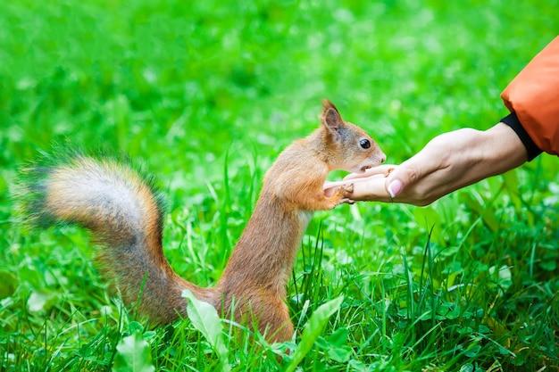 Carino piccolo scoiattolo in natura