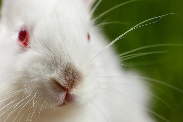 Piccolo coniglio bianco sveglio su una priorità bassa verde