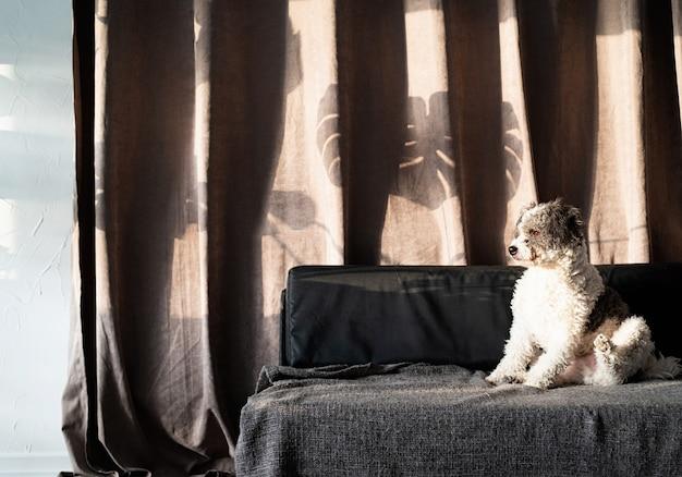 Simpatico cane di razza mista seduto su un divano, ombre di foglie dure sulla tenda. soggiorno. colori marroni e grigi