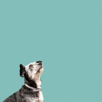 Cucciolo sveglio della razza mista che osserva in su con lo spazio della copia