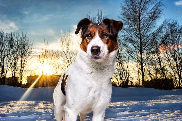 Simpatico cane bastardo a passeggio sulla neve nel parco invernale