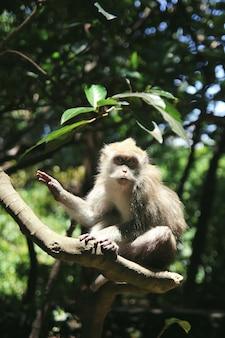 Scimmia sveglia che si siede sui rami nella foresta soleggiata