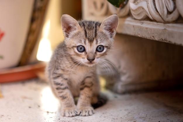 Gattino appena nato sveglio con gli occhi grigi