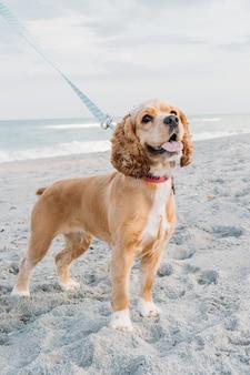 Simpatici animali domestici cane che camminano sulla spiaggia sabbiosa concetto di passatempo divertente con il cane in estate
