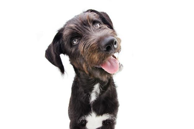 Grazioso cucciolo di cane ribaltamento lato testa. isolato su uno spazio bianco.