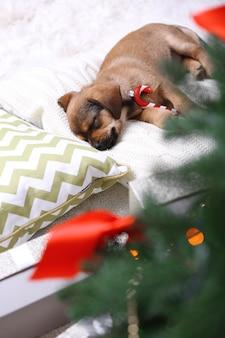Simpatico cucciolo che dorme sul cuscino con decorazioni natalizie