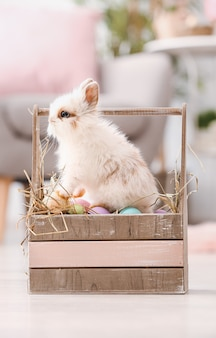 Simpatico coniglio nel cestino con le uova di pasqua sul pavimento in camera