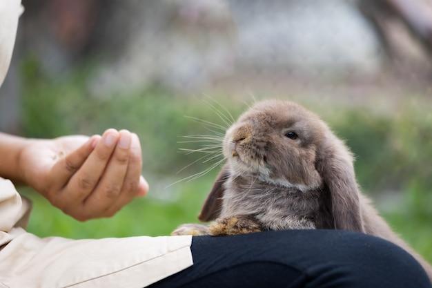 Simpatico coniglio che mangia cibo a pellet dalla mano della donna del proprietario. coniglio affamato che mangia cibo nel prato. proprietario che dà da mangiare ai suoi conigli. amicizia con il coniglietto di pasqua.