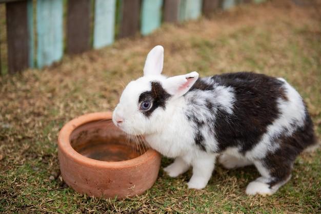 Simpatico coniglio in fattoria