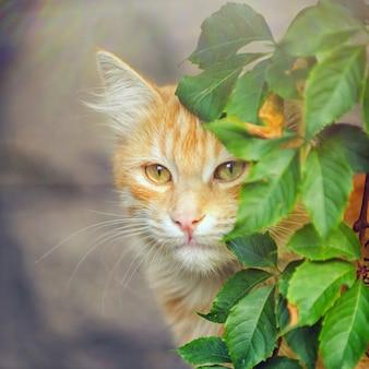 Gatto rosso sveglio che si distende nei raggi del sole, vicino al cespuglio