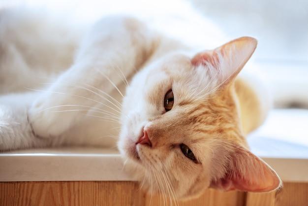 Gattino rosso sveglio che riposa su una bella luce