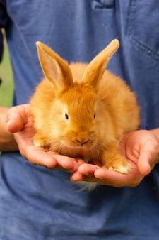 Simpatico coniglio rosso seduto sulle sue mani.