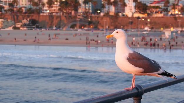 Uccello sveglio del gabbiano sulla ringhiera del molo. onde dell'oceano della spiaggia di santa monica, california, usa.