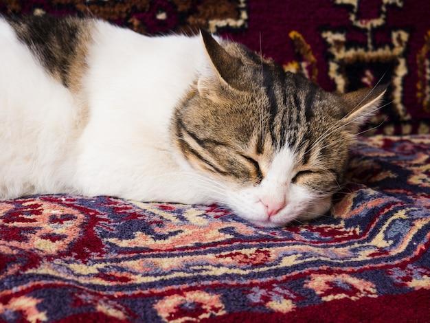 Il simpatico gatto maculato a pelo corto dorme su un colorato tappeto turco con ornamenti