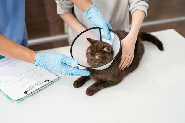 Gatto malato sveglio con imbuto intorno al collo che si trova sulla tavola medica circondata dal clinico veterinario e dal proprietario