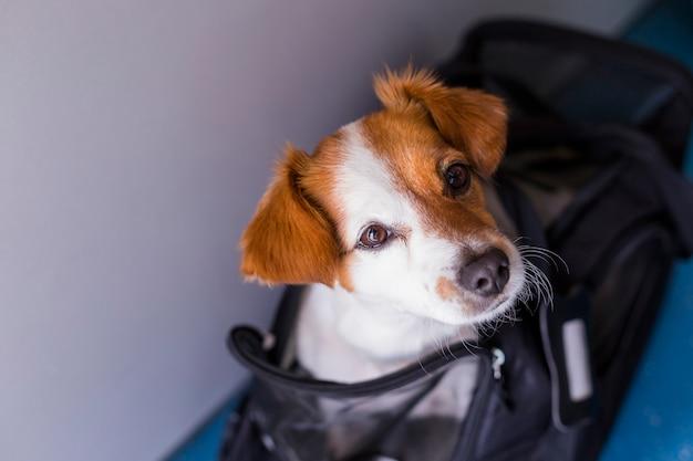 Piccolo cane sveglio nella sua gabbia di viaggio pronta a salire a bordo dell'aeroplano all'aeroporto. animale domestico in cabina. in viaggio con il concetto di cani