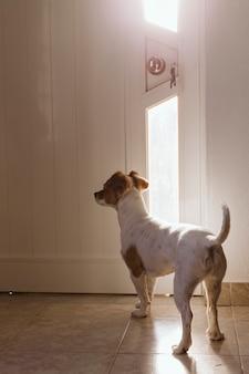 Carino piccolo cane in piedi vicino alla porta