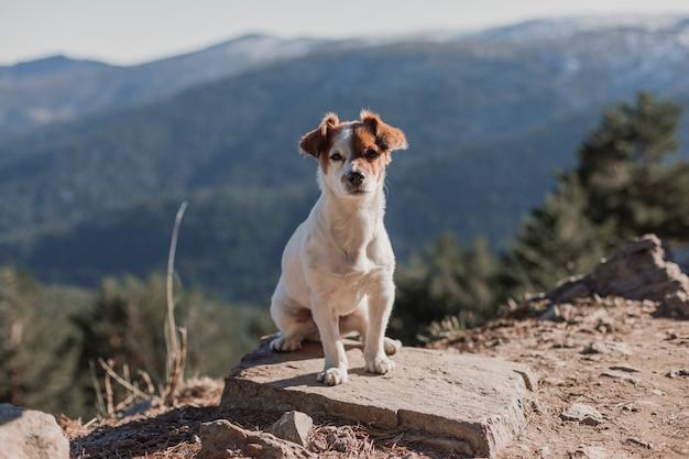 Piccolo cane sveglio che sta su una roccia. muro di neve. concetto di autunno o inverno. animali domestici all'aperto
