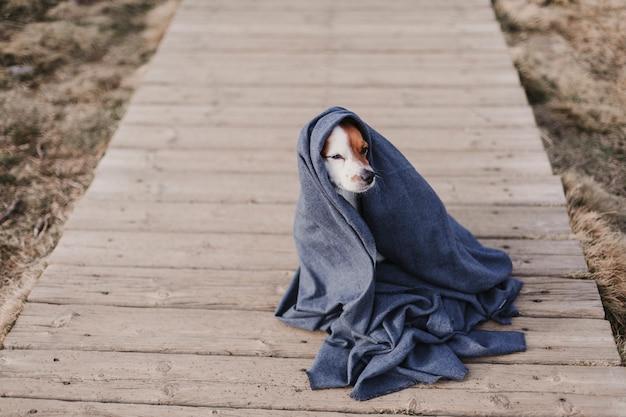 Simpatico cagnolino con mantello grigio. seduto sul pavimento di legno. concetto di autunno. all'aperto
