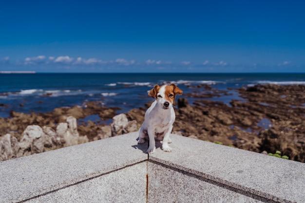 Terrier sveglio di russell della piccola presa che si siede all'aperto esaminando la macchina fotografica. fondo delle rocce e dell'oceano un giorno soleggiato.