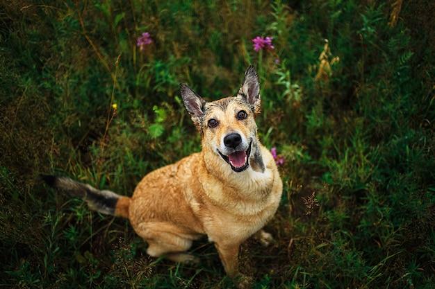 Simpatico cane bastardo intelligente con sfondo naturale