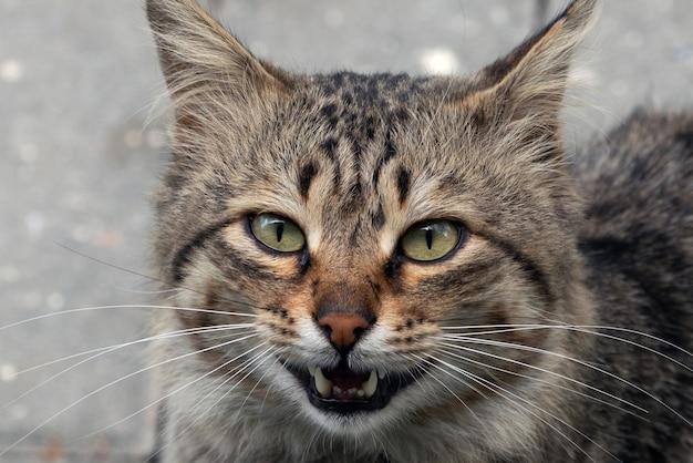 Simpatico muso di gatto randagio, ritratto