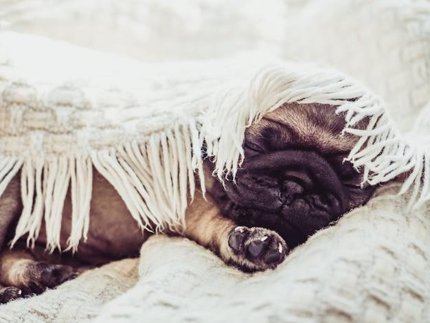 Cucciolo sveglio e dolce che si siede su una coperta bianca