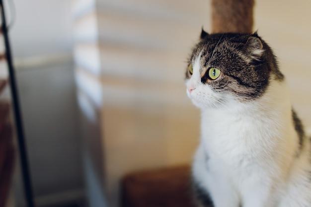 Gatto soriano sveglio che si siede sulla sedia in legno rustica rilassante sul retro in casa.