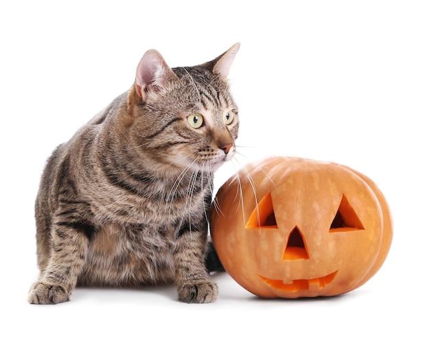 Simpatico gatto soriano con zucca di halloween su bianco