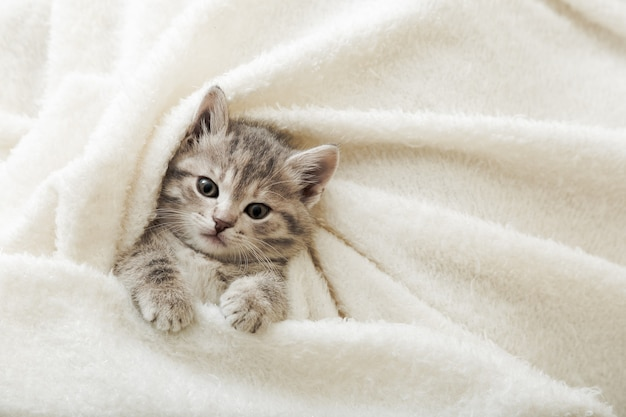 Il gattino sveglio del tabby si trova sulla coperta molle bianca. riposo del gatto che fa un pisolino sul letto. comodo animale domestico che dorme in una casa accogliente. vista dall'alto con copia spazio.