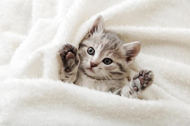 Ritratto di un gattino soriano carino con zampe che dorme su una coperta morbida bianca che riposa sul letto che fa un pisolino sul letto comodo animale domestico che dorme in una